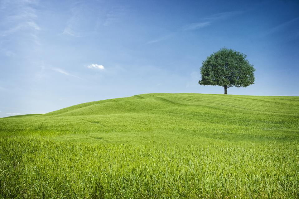 green field with tree off in distance